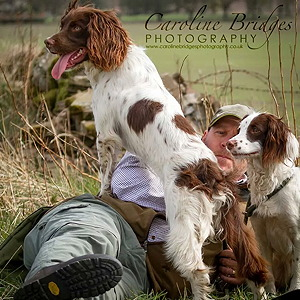 English Springer Spaniels and Cocker Spaniels